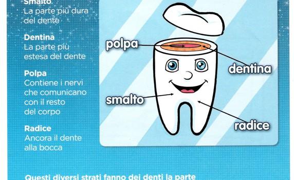 Come sono fatti i denti e loro funzioni