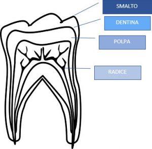 Come sono fatti i denti